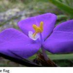 Flower Essence Healing